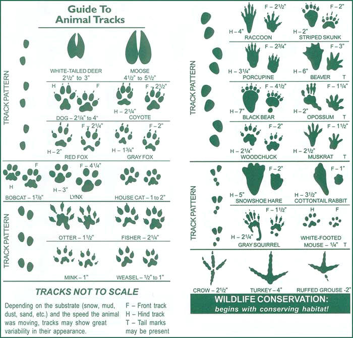trapping for preppers animal tracks guide